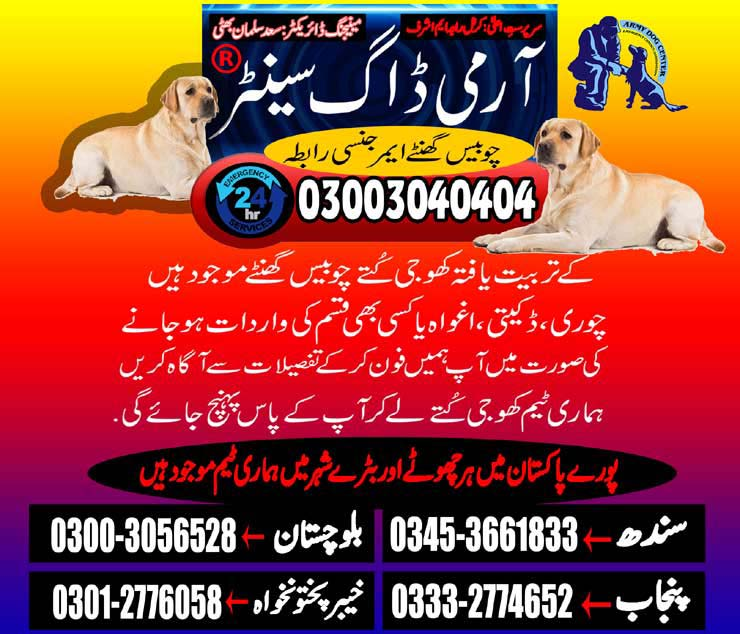 Army Dog Center Providing Best Services
