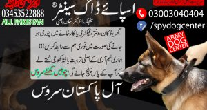 Armi Dog Center Karachi