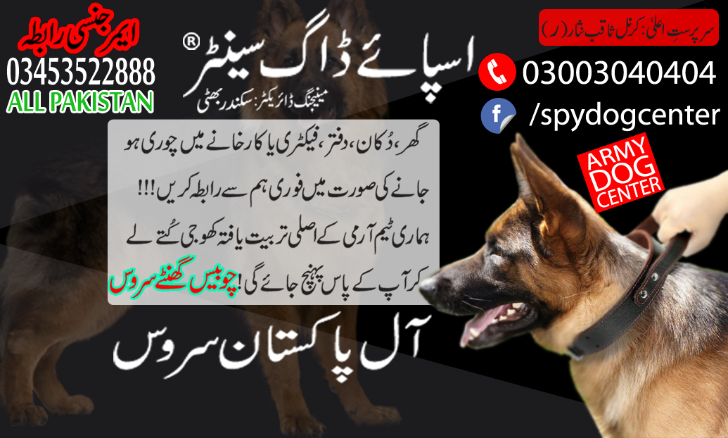 Armi Dog Center Karachi Best Service In Pakistan