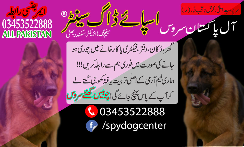 Arme Dog Center All Pakistan Service 24 Hours