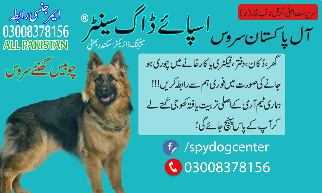Armi Dog Center Okara All Pakistan Service Available