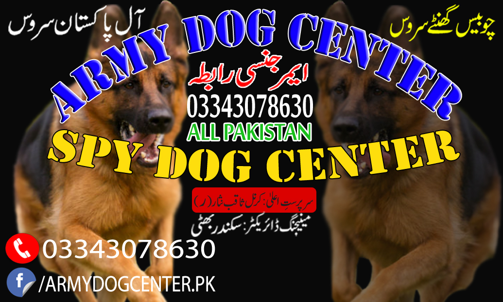 Thief Dog Traced Within Few hours In Army Dog Center Okara