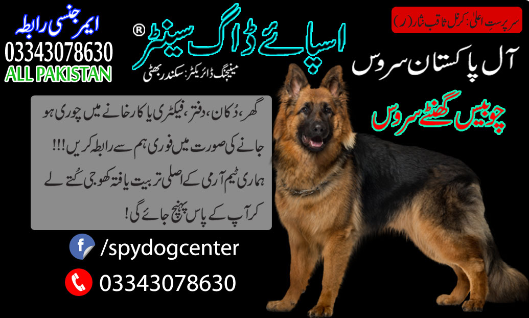 Labrador Dog Training In Arme Dog Center Pakistan