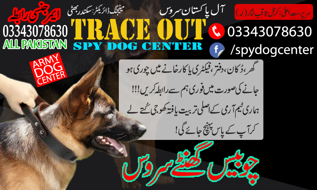 Trace Out Army Dog Center Trained Spy Dogs Available