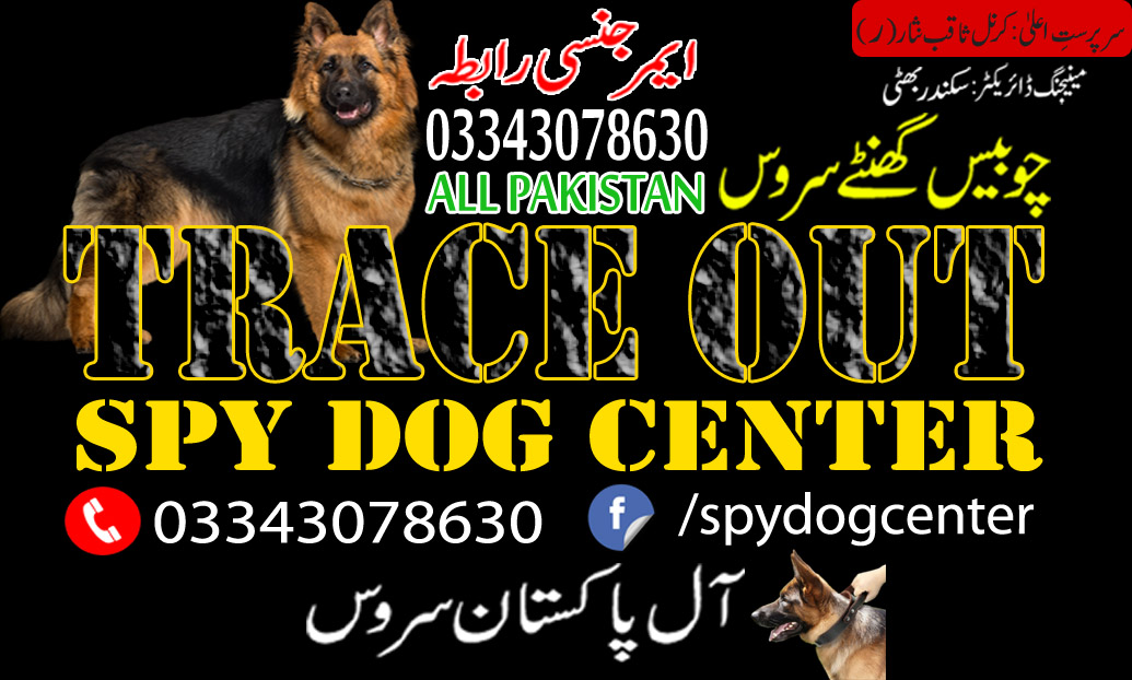 German Shepherd Heat Cycle By Trace Out Dog Center