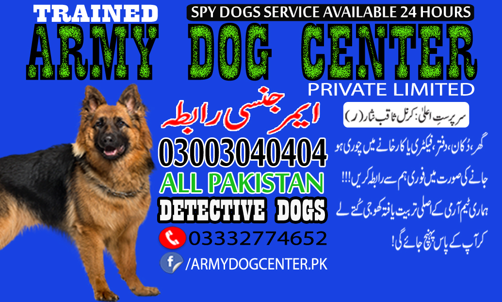 Army Dog Center Dogs Spy Service Graph and Reality