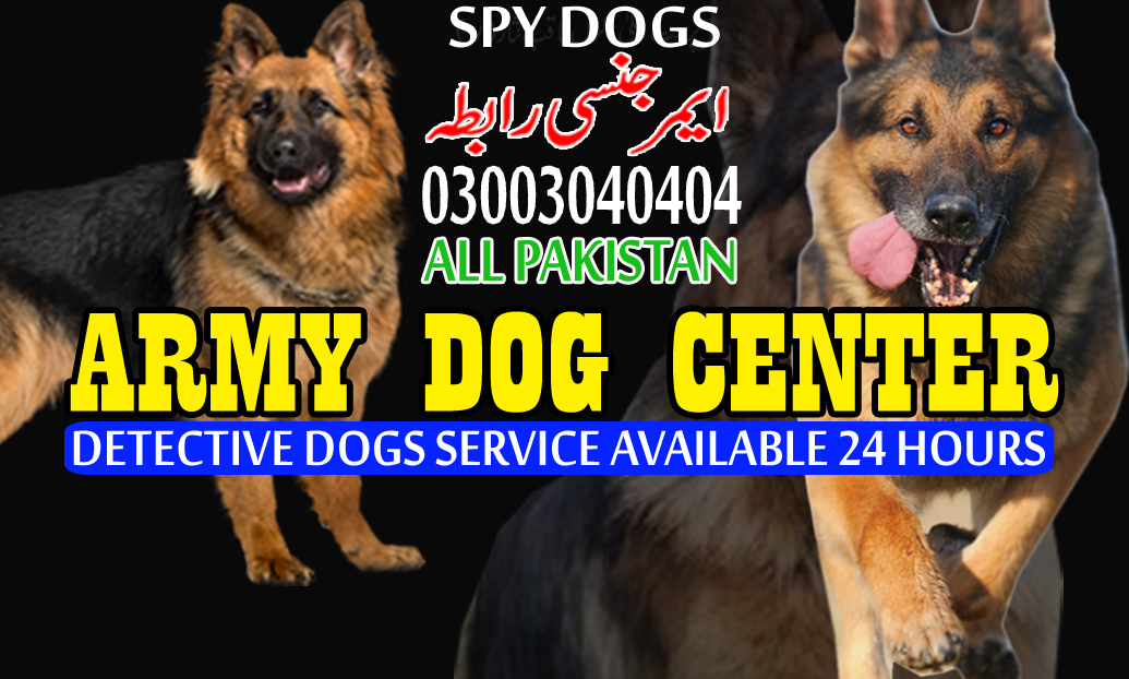 lahore dog center