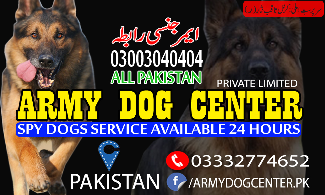 Lahore Dog Center Original Army Trained Dogs