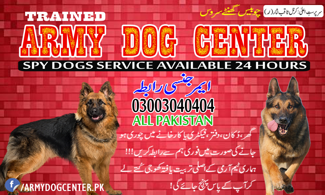 Jehlum Army Dog Center Best Service of Original Detective Dogs