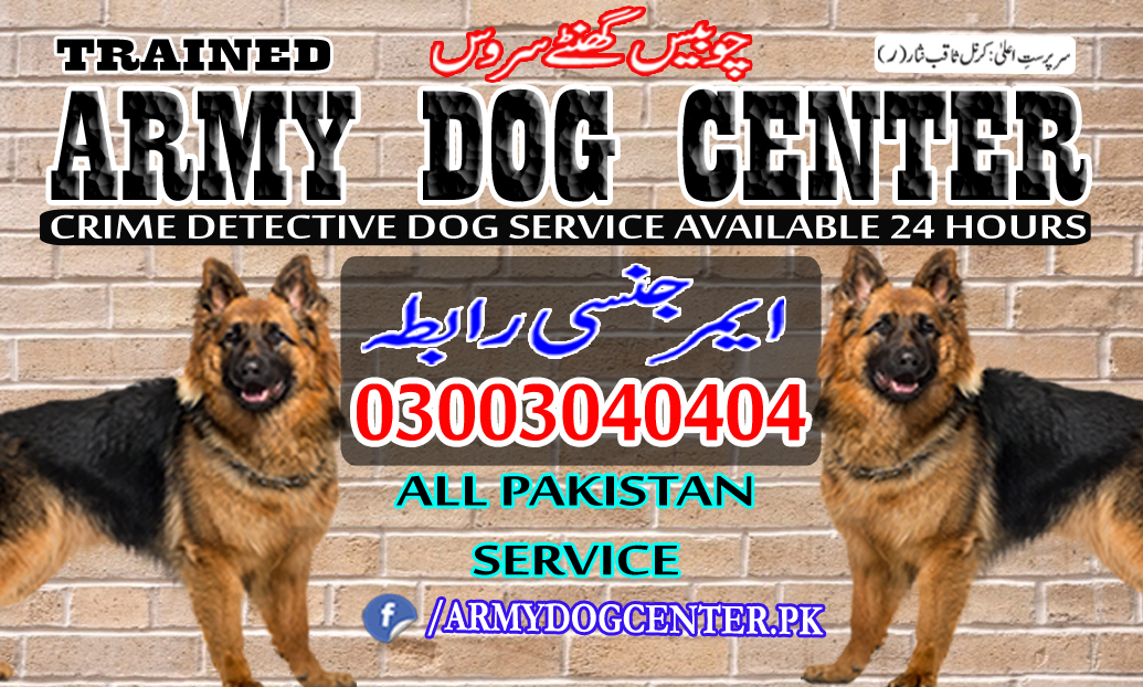 Peshawar Dog Center 03003040404 Emergency Call All Pakistan