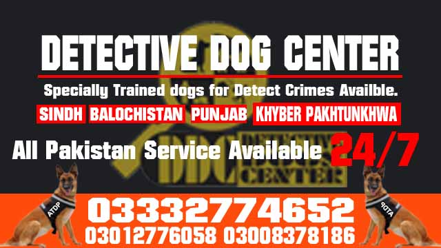 Army Dog Center Dog Training Tips Emergency Contact 03003040404