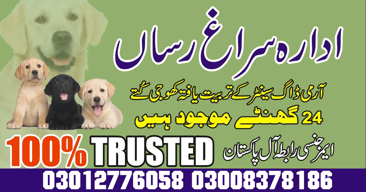 army dog center (1) Emergency Contact 03003040404 Detective Dogs