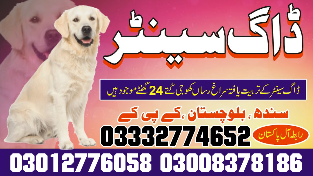 Lahore Dog Center Pakistan 24/7 Emergency Call 03332774652