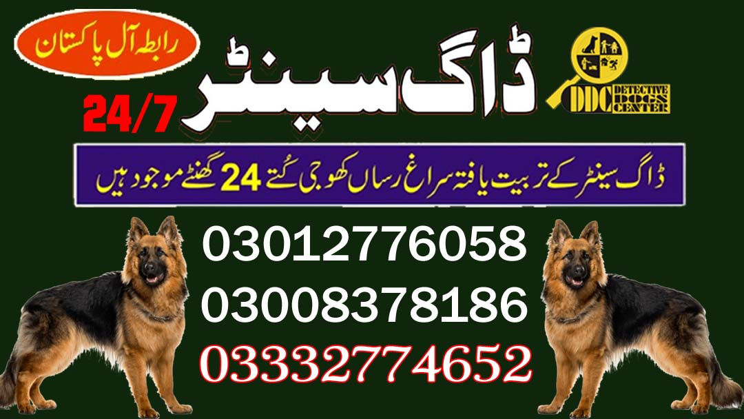Army Dog Center 03003040404 Service Available In Near Areas