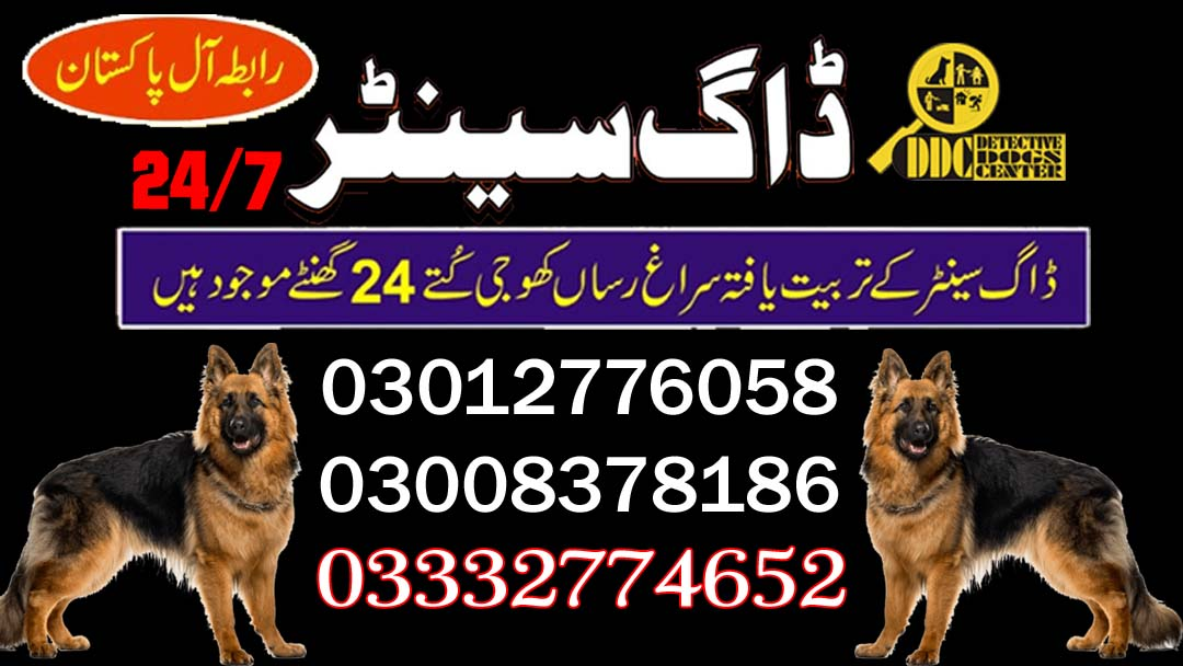 Army Dog Center 03003040404 Most Search In Google Top