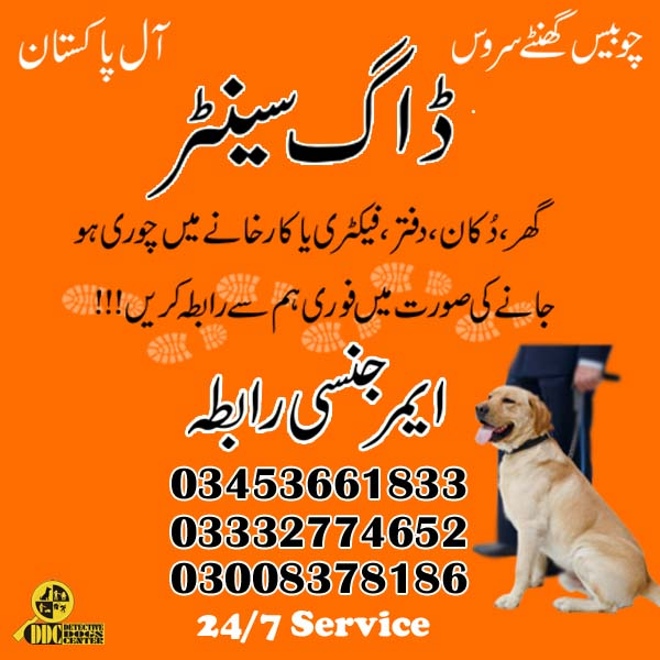 Army Dog Center 03003040404 Best Service Provider in Pakistan