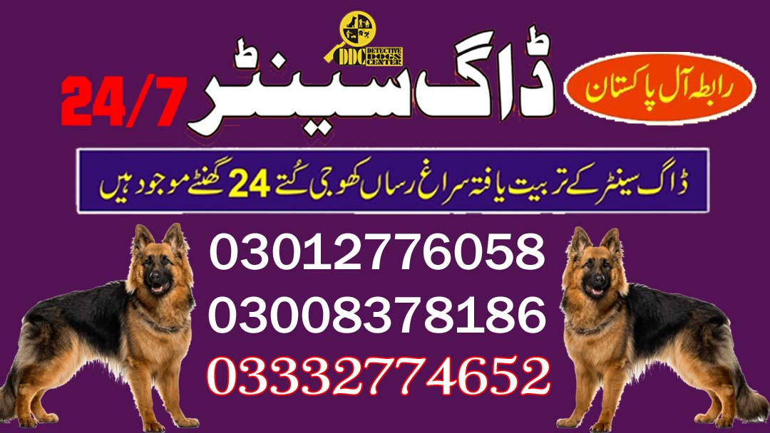 Army Dog Center Pakistan 03003040404 Service Available Near Areas