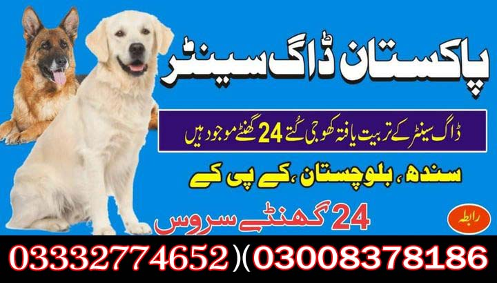 Army Dog Center 03003040404 Quick Service All Areas Pakistan