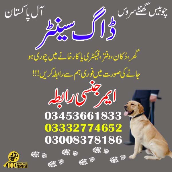 Army Dog Center 03003040404 Faisalabad Dog Center