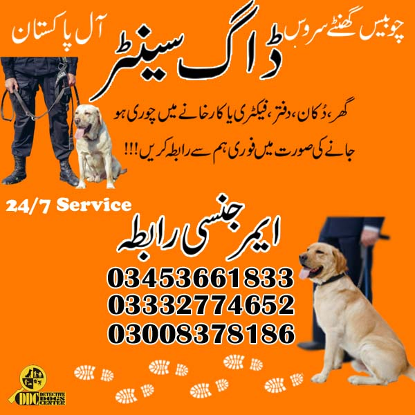 Army Dog Center Jhang 03003040404 Emergency Contact