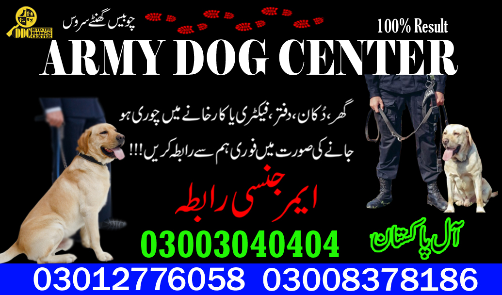 Army Dog Center 03003040404 Best Detective Dogs In Pakistan