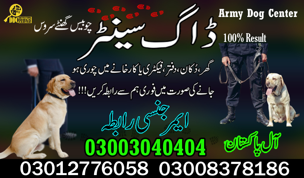 Army Dog Center 03003040404 Best Sniffer Dogs Available