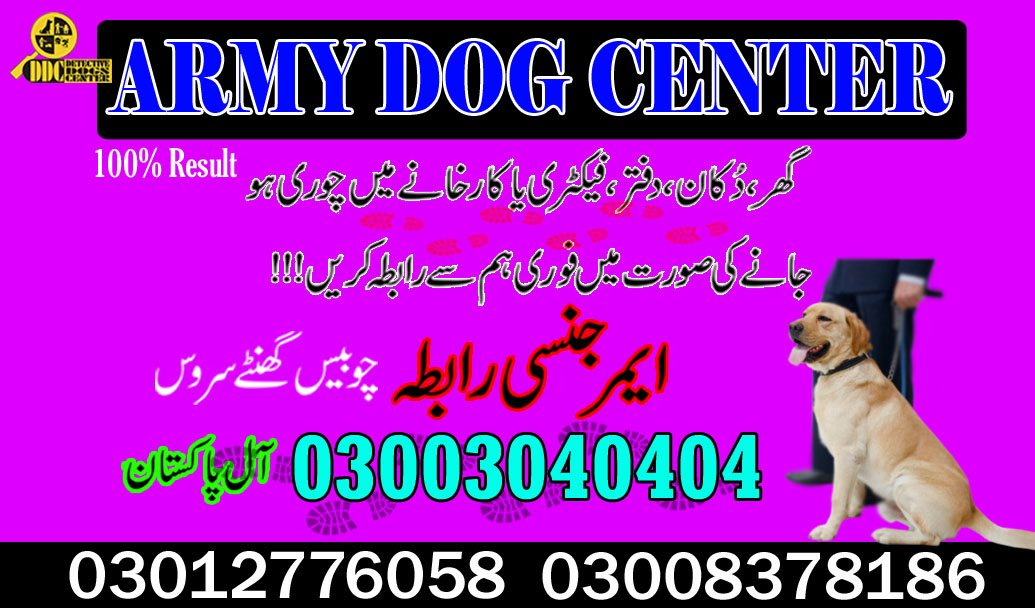 Army Dog Center Gujrat 03003040404 Best Sniffer Dogs Available