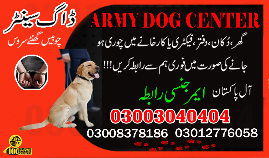 Trace Out Dog Center 03003040404 Emergency Near By Location