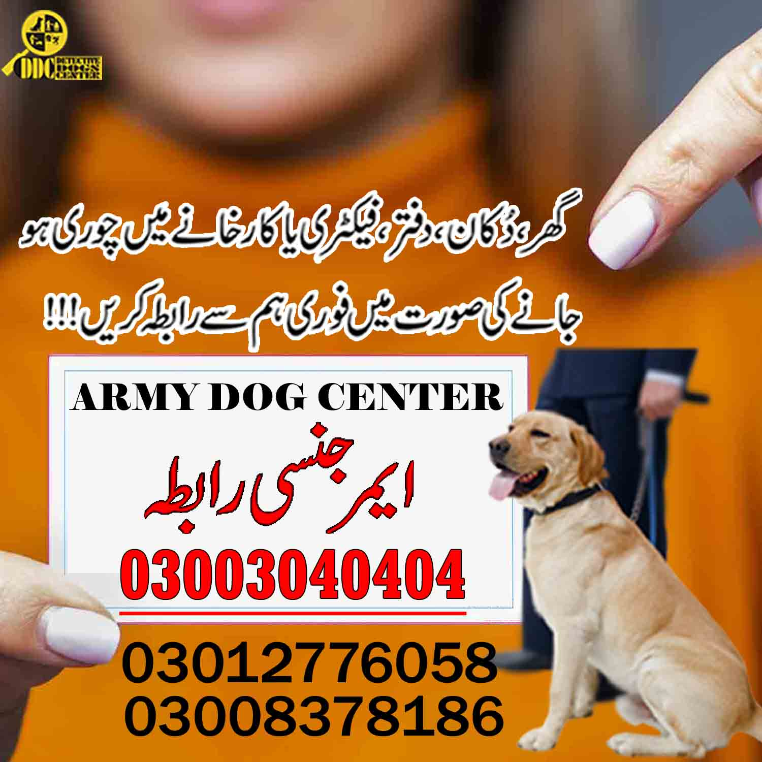 Top Army Dog Center Pakistan 03003040404 Call For More Informations