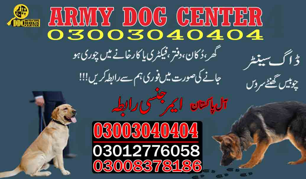 Army Dog Centre Service in Pakistan 03003040404 Call Army Dog Center